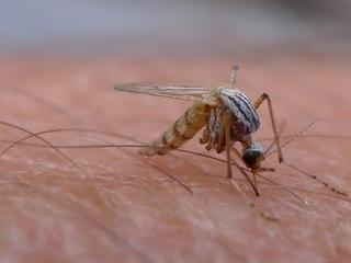 Más de 16,000 casos de virus Zika en Colombia