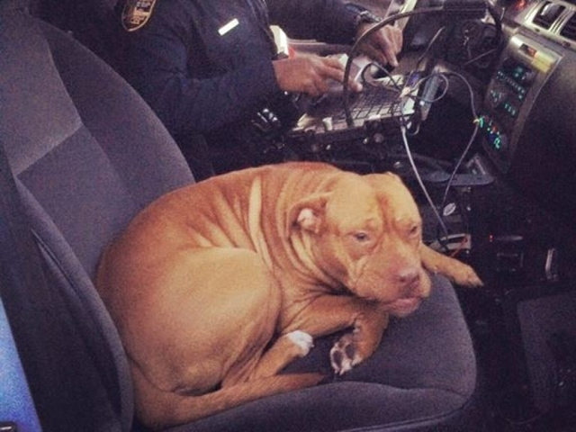 Florida Pooch Plays Police Officer, Hops Into Open Cruiser