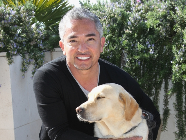 Cesar Millan Under Investigation for Possible Animal Cruelty Involving Pig