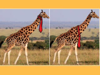 Online debate: How would a giraffe wear its tie?