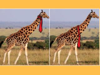 Online debate: How would a giraffe wear its tie?