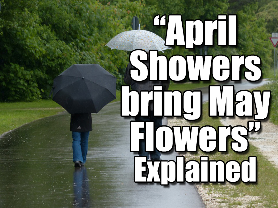 Why April Showers Bring May Flowers