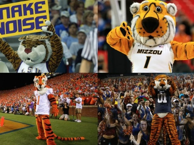 NCAA Tigers Are Teaming Up To Protect Tigers In The Wild