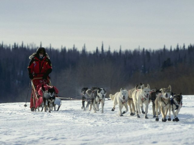 Iditarod Sled Dog Doping Prompted New Rules For The Race