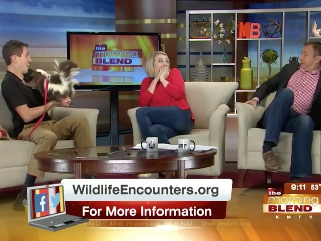 Skunk Prank Makes Tv Anchors Freak Out Newsy Story