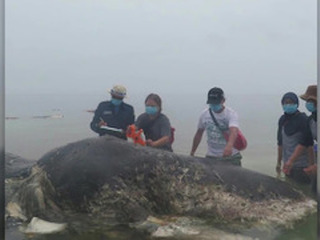 Dead whale had swallowed 13 pounds of plastic